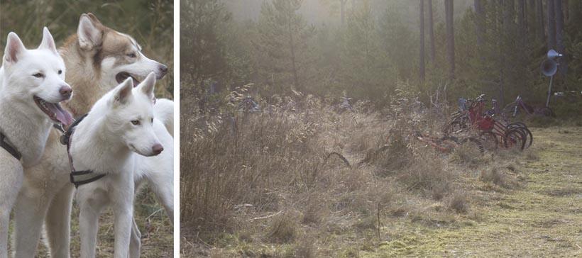 aviemore dog sled_©dapplephotography 63